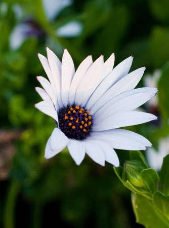A bloomed flower Imagens