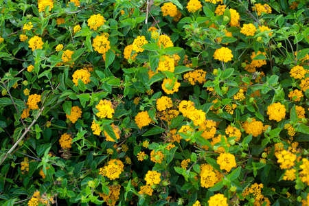 A Bed of Yellow Flowers that covers the ground.