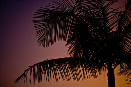 Palm tree silhouette Imagens
