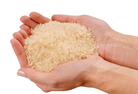 some raw rice is on female hands, a fistful of white rice,  a handful of raw cereal