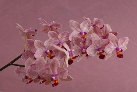 pink orchid is on lilac background Stock Photo