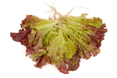 green and purple lettuce, isolated salad; green ang red salad, fresh salad, red lettuce is on white background,  bunch of colorful salad; single object Stock Photo