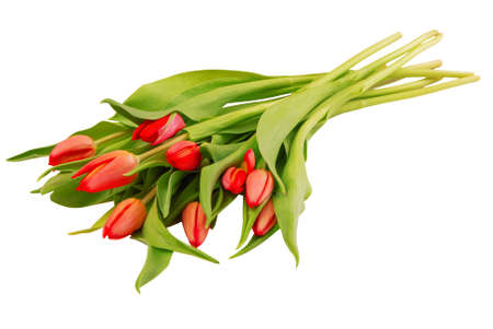 bouquet of tulips on white background, isolated red flowers, beautiful buds, romantic gift as single object, summer bloom, spring bloosom, red and green colors