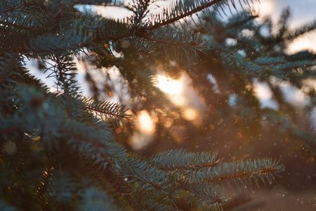 soft focus: Naturaleza, ramas de abeto, humor, enfoque suave, ambiente, foto ambiental, A�o Nuevo, puesta del sol, orbes, enfoque suave