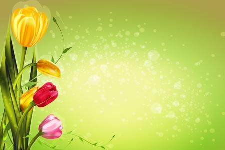 bunch flower: Spring tulip flowers