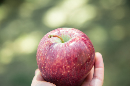 Fresh red apple in a hand. Just taken from the tree, in a little country in the south of Italy. Concept of authentic natural, healthy food and life in nature