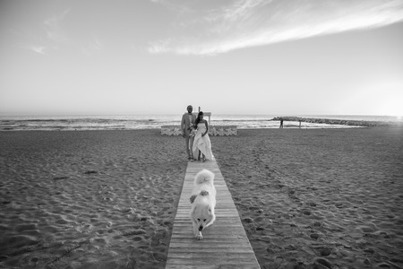 Bride and groom walking on the beach with their dog