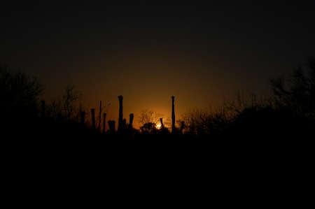 Saguaro cactus backlit by sunset in Tucson, Arizona 版權商用圖片