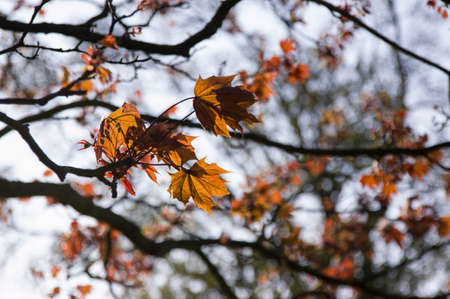 Details of autumn leaves on tree branches in an afternoon in a park.