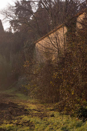 Taken in fall during a cold morning walk at Montpellier. A muddy path is on the foreground