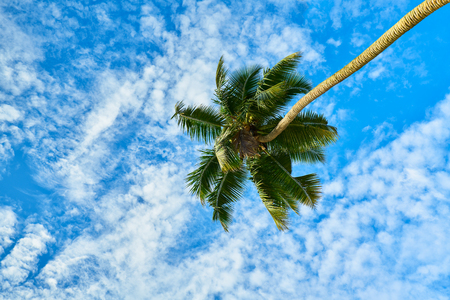 palm tree on sky with clouds