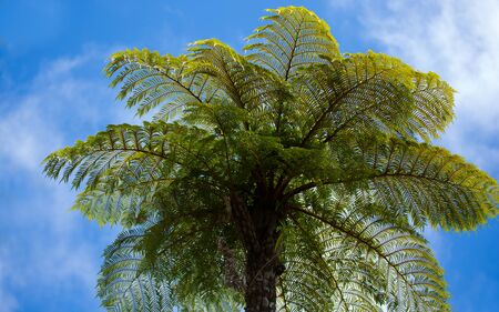 fern with sky, Reunion island