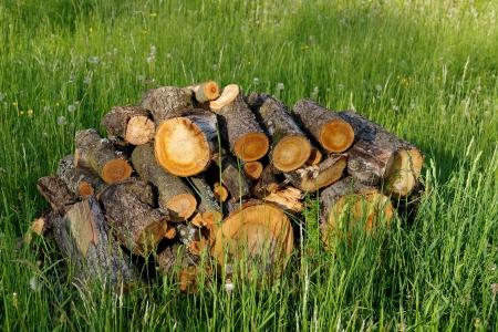poised: Poised wood Stock Photo