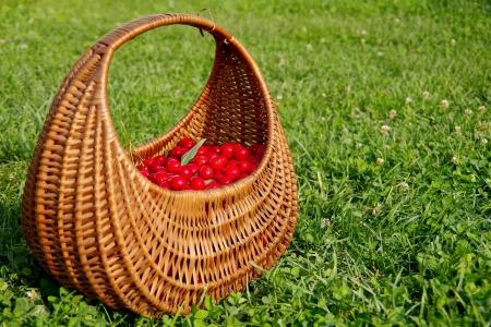 Basket full of cherries