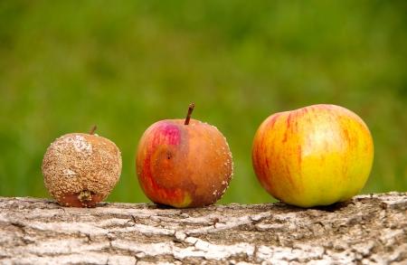 Pommes Banque d'images - 21950020