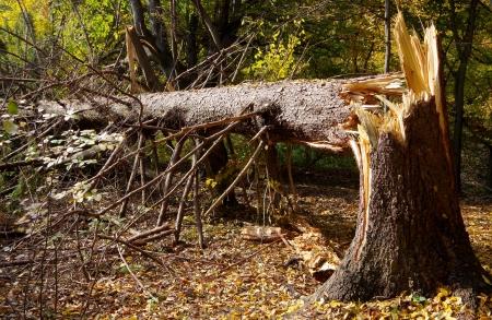 wind down: Broken tree