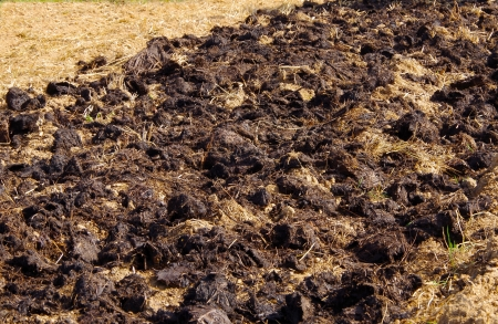manure: Cow manure in the garden Stock Photo