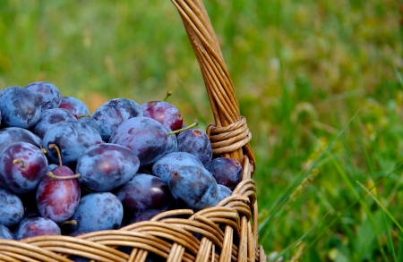 Blue plums in a basket