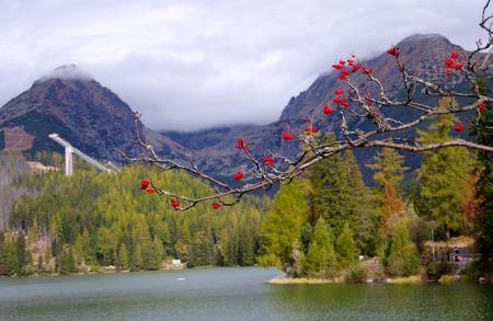 Branch of a tree, Strbske Pleso, High Tatras