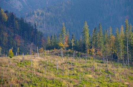 high winds: Broken trees in the High Tatras, after strong winds Stock Photo
