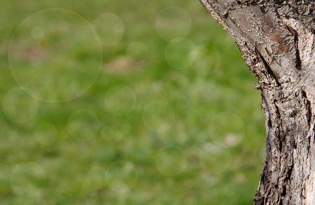Tree trunk  on a green background with bokeh