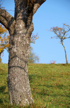 Trunk of a tree on a green meadow