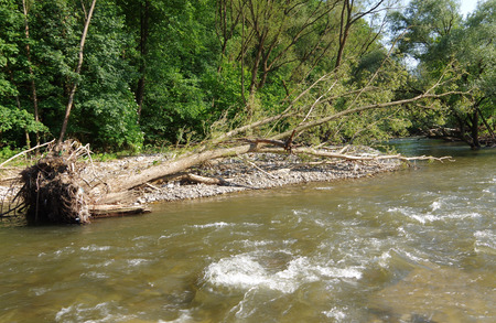 Tree on the bank of the river, knocked down during high water