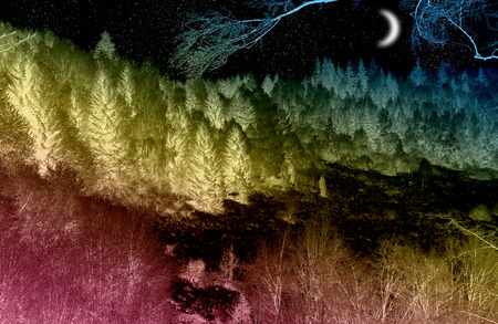 coniferous forest: Bosque de con�feras m�gica en la noche con la luna