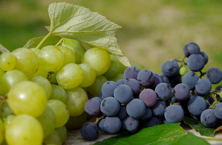 Blue grapes and green grapes on wooden table