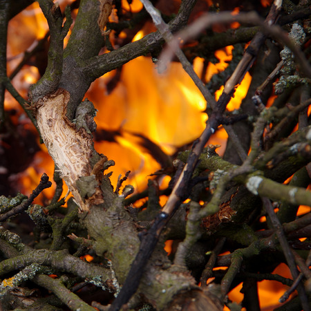 cut off: Burning tree branches, cut off in spring Stock Photo