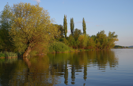 Willow on the bank of the lake in spring