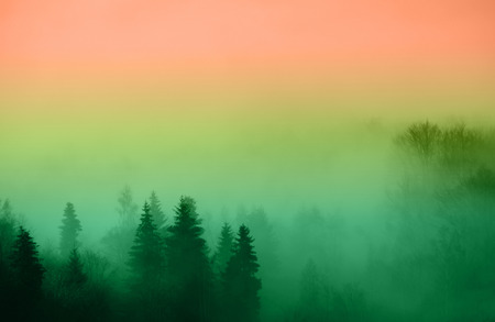 immersed: Colored forest immersed in fog in the autumn Stock Photo