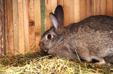 rabbit in cage: Brown rabbit in the cage on dry grass Stock Photo