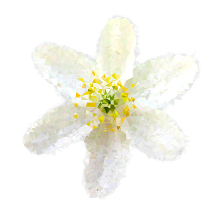 Triangle polygonal silhouette of white flower on white background