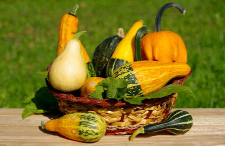 Ornamental pumpkins as a decoration in basket Stock Photo