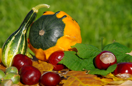 The fruits of nature in autumn on a wooden table Stock Photo