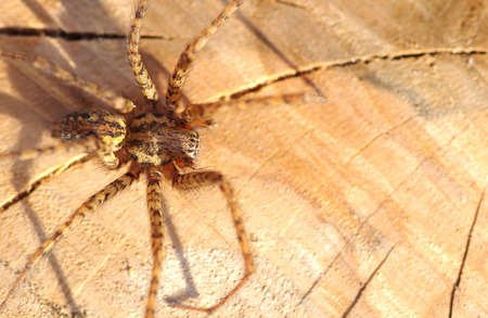 Detail of a spider on a wooden background, outdoors