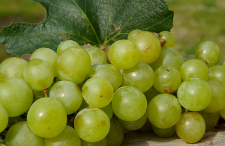 Green grapes on wooden table in autumn Stock Photo