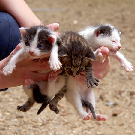 Three small cats in the hands of women Stock Photo