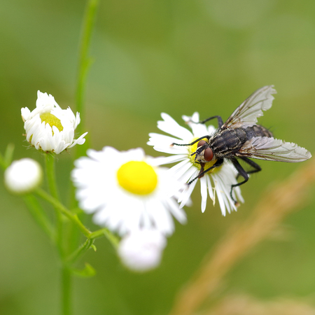 background: Fly on flower on the green background Stock Photo
