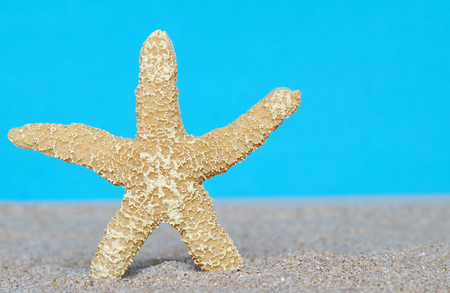 Sea star in sand and blue background
