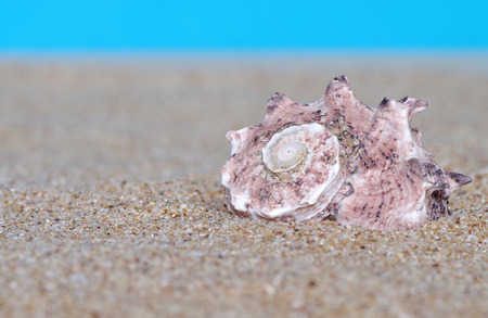 Sea shells in sand on blue background