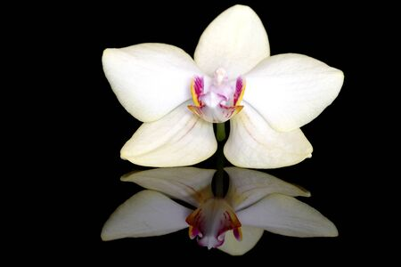 Orchid flower on black background with reflection