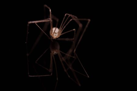 Spider on black background with a reflection