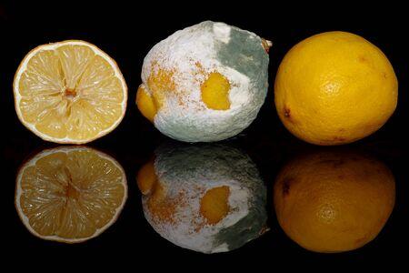 Lemon and moldy lemon on a black background with reflection