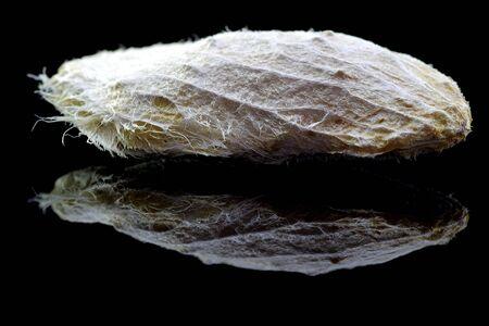 Mango seed on black background with reflection