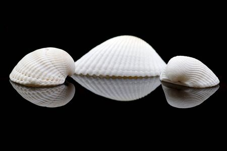 Three sea shells on black background with reflection