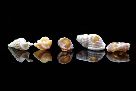 Five sea shells on black background with reflection