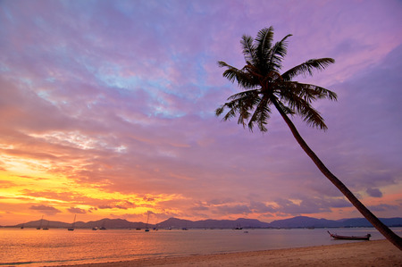 purple sunset: Palm tree silhouette on sunset tropica Thail beach with a boat.