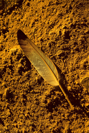 ground: Feather on the ground.